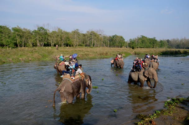 Chitwan-Nationalpark Elefanten 01